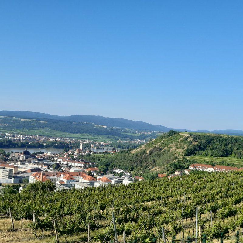 ....und entlang der Weingärten in der Wachau - 1. virtuelles SVF Lauf- und Walking-Event - Sportverein Finanz